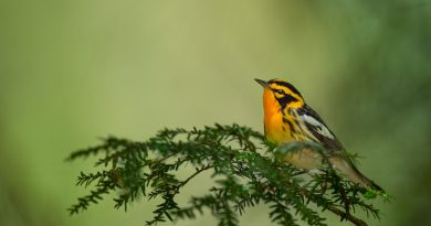 What Bird Do You Most Want to See During Spring Migration?